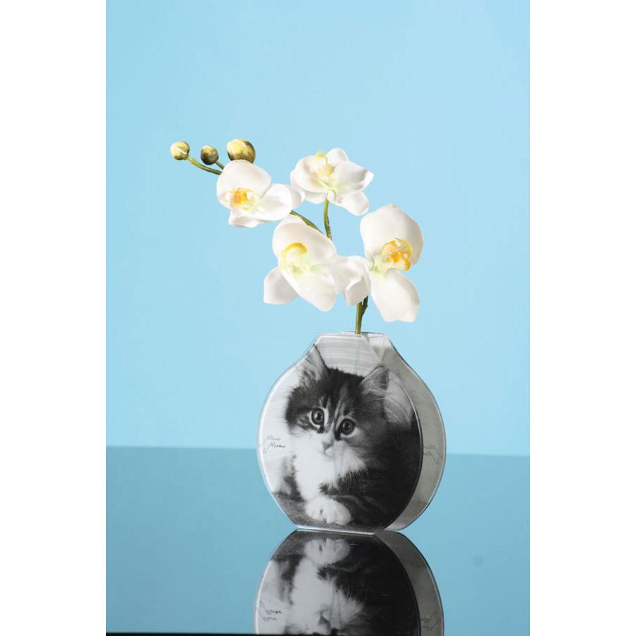 CLEVERCAT - Pussy-Versand Webshop - Glasvase Cat, Glasvase, Vase ...
